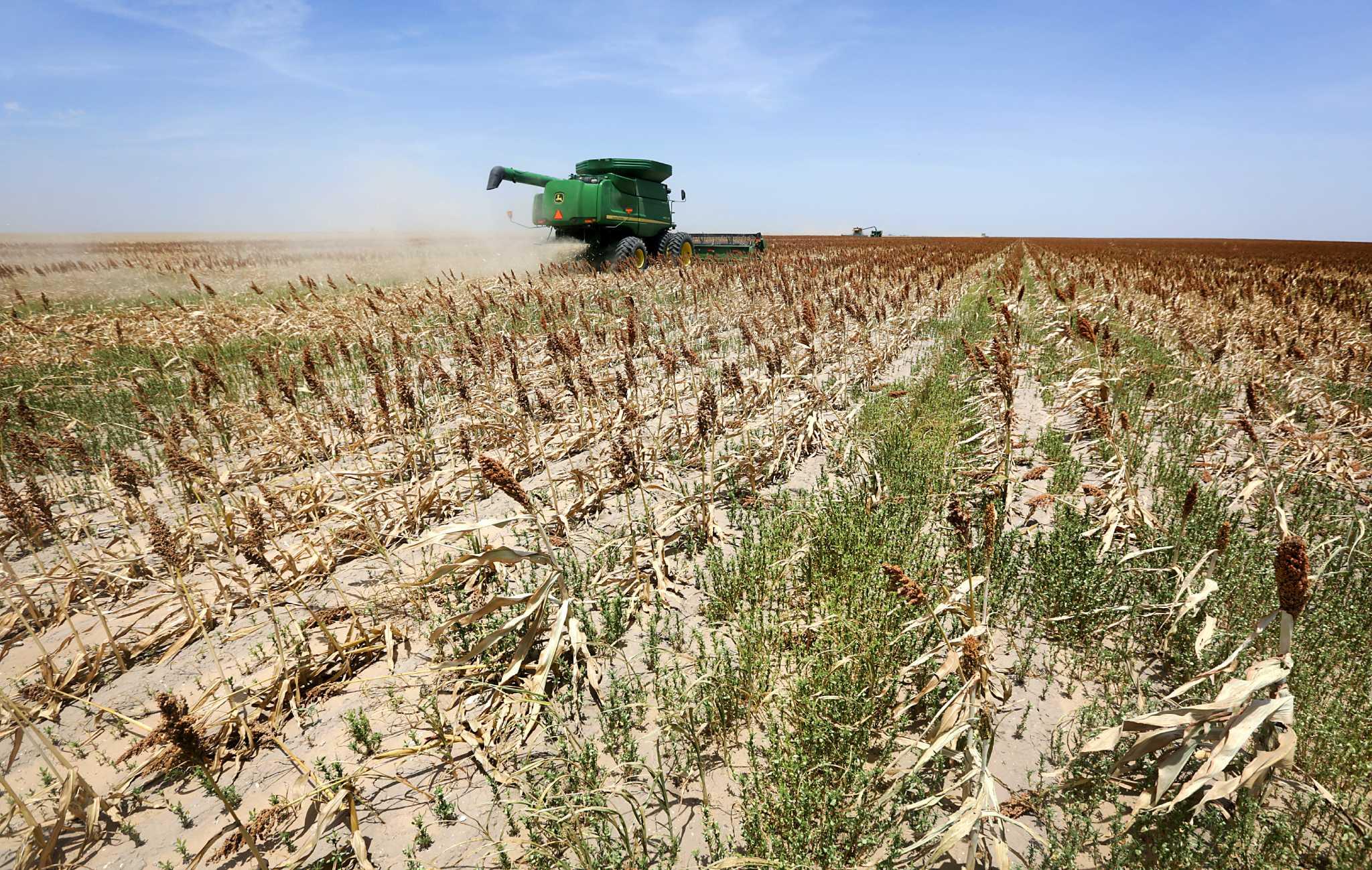 Big Farms Cause Big Problems