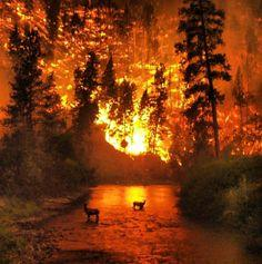 Wildlife interact with wildfire