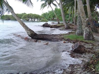 High tides and palm tree erosion.