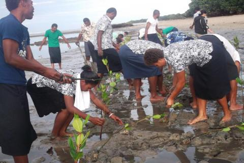 Community Members Plant Mangroves