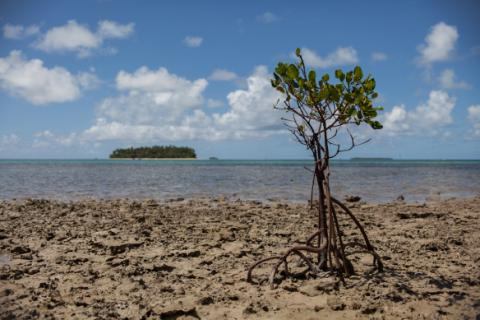 Mangrove Destroyed by Coastal Erosion