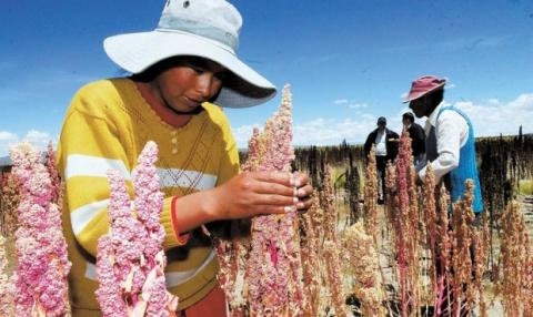Women farmers quinoa