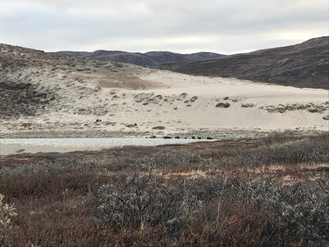 Greenland open sand area