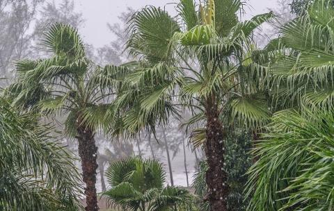 Palm trees in monsoon Thailand
